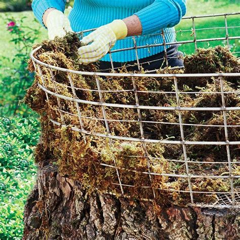 Tree Planters Nursery Springvale by Form The Basket Use An Wire Basket Or Form One From Galvanized Steel Field Fencing