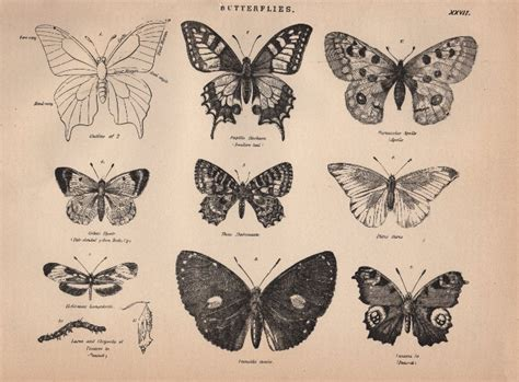 butterfly old vintage free ppt backgrounds for your free clip art vintage butterflies the graphics fairy