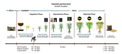 What Calendar Do They Use In India Addressing Knowledge Gaps In Rice Growing In Eastern