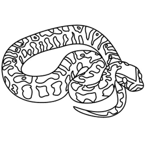 burmese python coloring page coloring pages