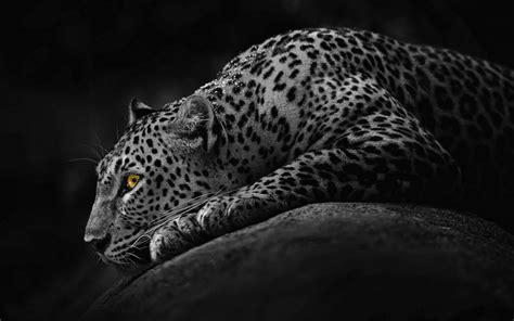 black jaguar car wallpaper black jaguar wallpapers hd download