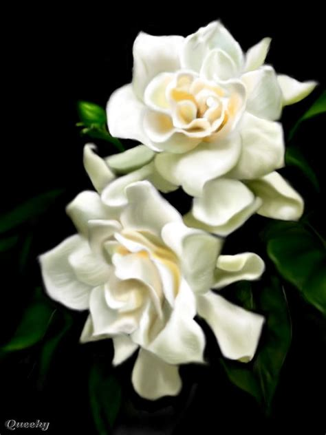 gardenia flower 206 best images about flowers gardenia on