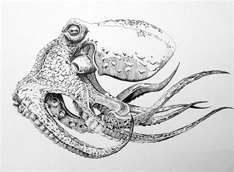 boat and octopus drawing pen and ink octopus on behance art pinterest ink