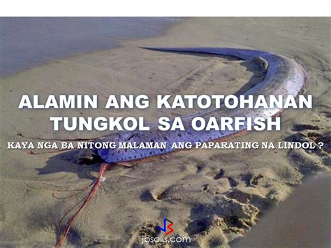 earthquake fish oarfish can they really predict earthquake before it occurs
