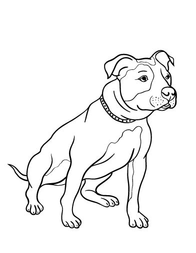 pitbull coloring pages to print coloring pages