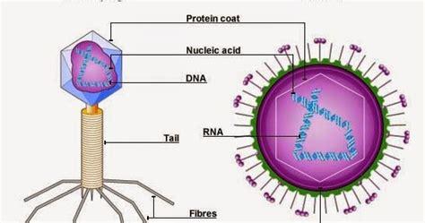 struktur biografi adalah pengertian struktur sejarah penemuan virus