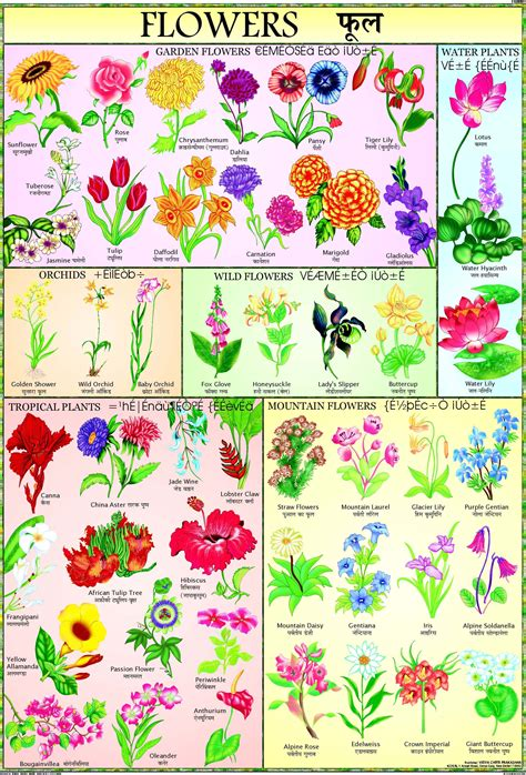 Flower With Chart Paper - nursery chartsflowers chart for children paper print price