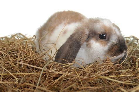 best bedding for rabbits best bedding for rabbits 28 images hd animals rabbit