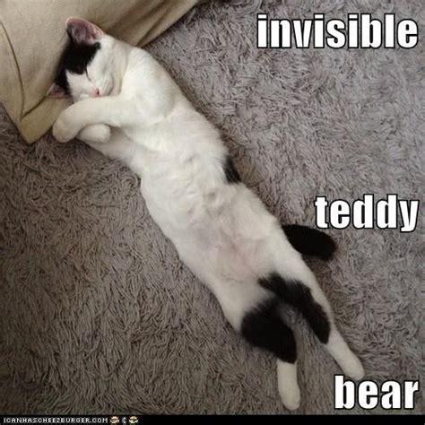 Teddy Bear Meme - the gallery for gt funny teddy bear meme