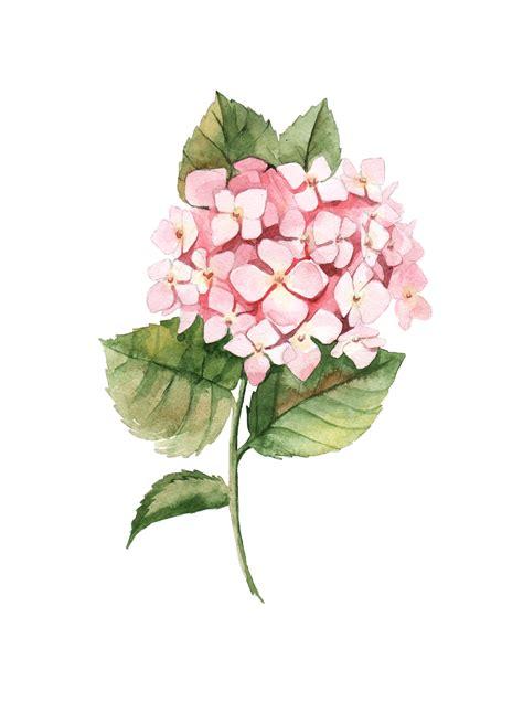 botanical colors watercolor botanical drawing by aleksandra goga