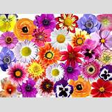 Pink Vintage Wood Background | 640 x 475 png 761kB