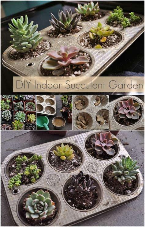 wonderful succulent garden ideas   home