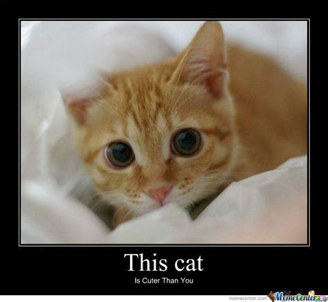 Cute Kitten Meme - love ginger cats cute cute pinterest the