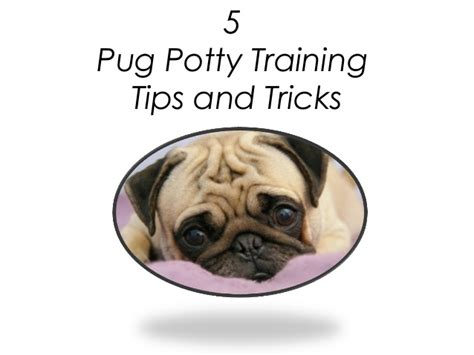 are pugs to potty 5 pug potty tips and tricks