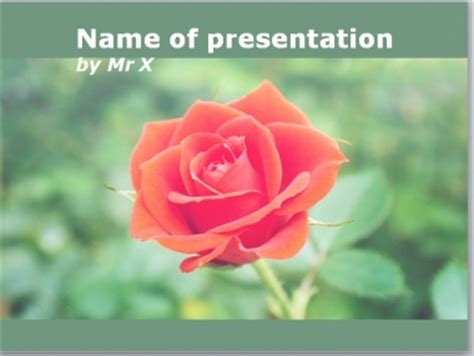 theme powerpoint rose beautiful rose flower powerpoint template