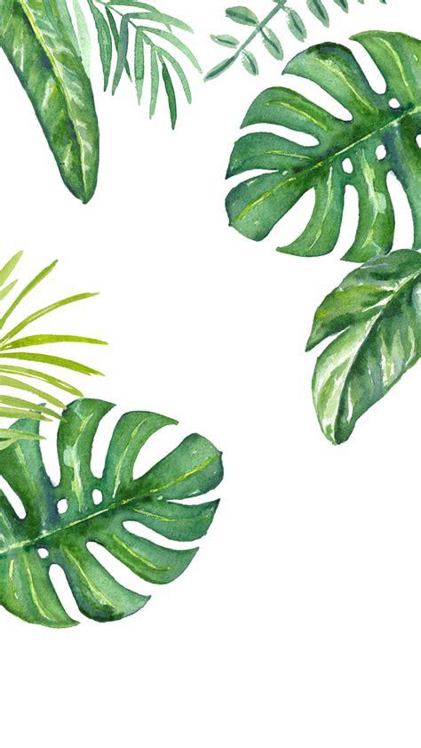 plant wallpaper plants watercolour iphone wallpaper iphone wallpapers