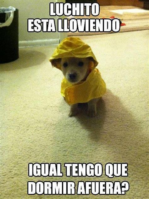 imagenes graciosas lucho lucho perros memes y mascotas full imagenes humor