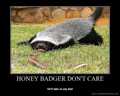 Badger Memes - image 739640 honey badger know your meme