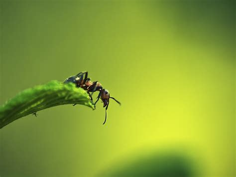 easy apply wallpaper green and protective wallpaper ant on grass much