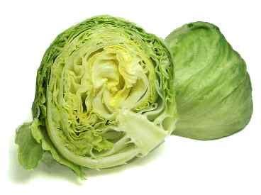 lettuce  long  lettuce  shelf life