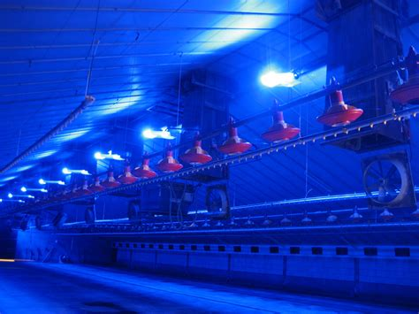 poultry farm lighting system poultry and hatchery led lighting controlled systems
