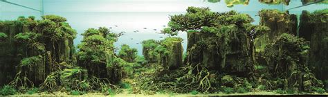 Aquascape Malaysia by International Aquatic Plants Layout Contest 2014 Ada