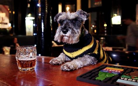 britains   dog friendly pubs  perfect