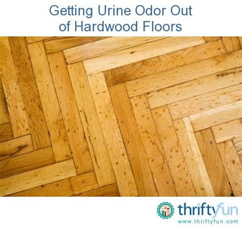 Urine On Wood Floors How To Clean by Cleaning Pet Urine Odor From Hardwood Floors Urine Odor