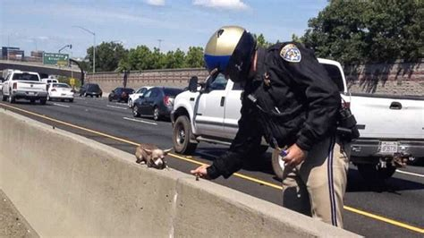 rescue california chihuahua rescue on california highway creates social media sensation abc news
