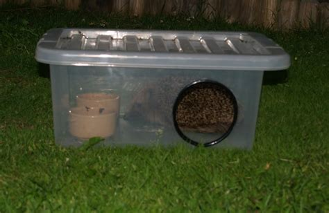 Hedgehog Feeder plastic container hedgehog feeder petdiys