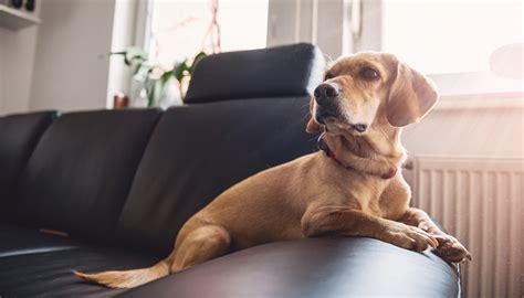 cani in appartamento come tenere un in appartamento pericoli domestici