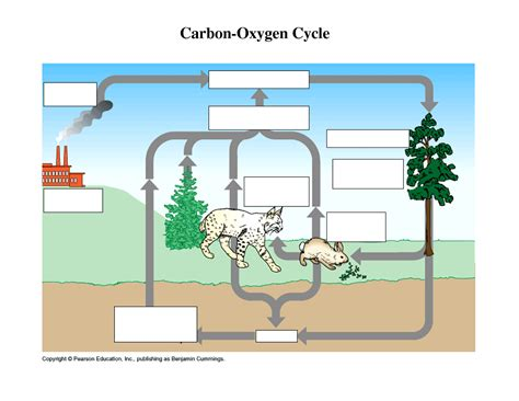 carbon cycle diagram worksheet malik gk power carbon oxygen cycle