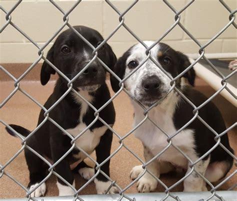 humane society puppies humane society debuts homeless puppies at petco humane society of nw montana