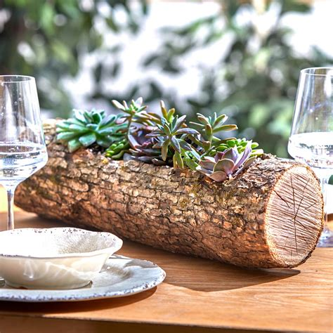 How to Make a Wood Log Planter With Succulents ? Family