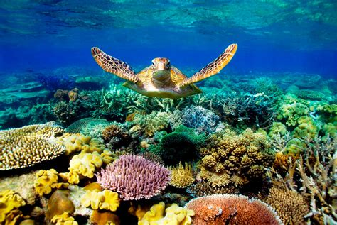 best place to dive the great barrier reef best cairns great barrier reef dive snorkel