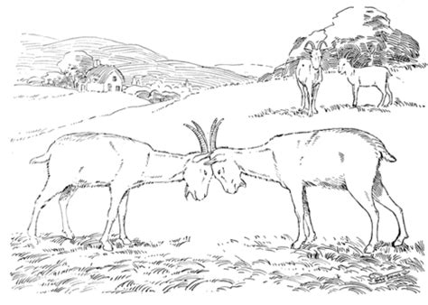 realistic goat coloring page realistic goat coloring page goats butting each other