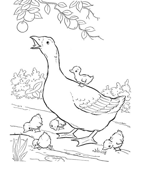 coloring pages of animals that are printable baby farm animals coloring pages free coloring pages