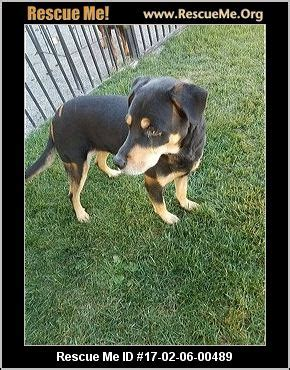 rottweiler rescue idaho idaho rottweiler rescue adoptions rescueme org