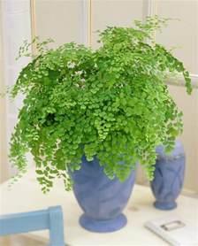 kitchen plants that don t need sunlight las 17 mejores plantas de interior