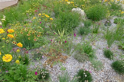 xeriscape design meaning managing water in your landscaping portland rock and