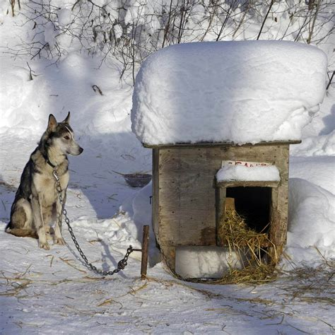 insulate dog house 12 ways to keep your dog warm outside the family handyman