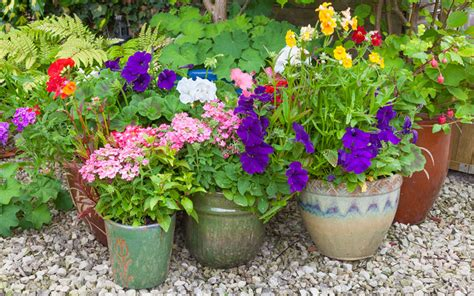 best plants for container gardening tips on how to choose and combine the best plants