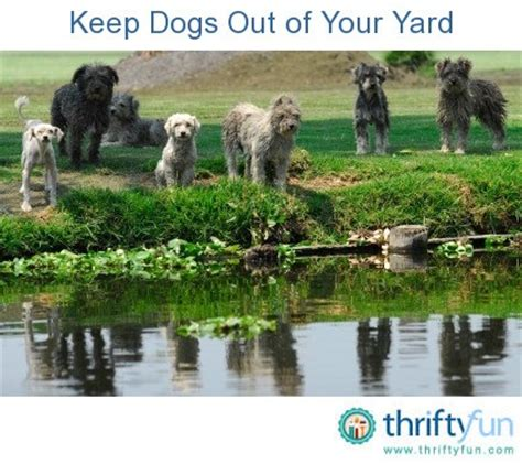 how to keep dog in yard how to keep dogs out of your yard thriftyfun