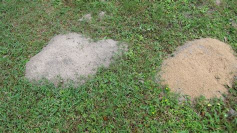 ants in backyard termite mound in yard www pixshark com images galleries with a bite