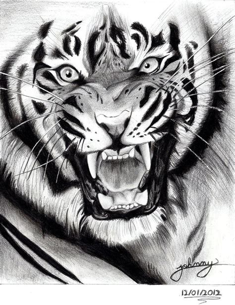 tiger drawing by johnny designer on deviantart