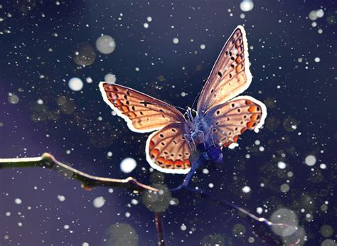 it was snowing butterflies blue butterfly night photography snow image 443510 on favim com