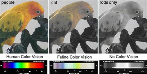 Cats Lover Cat Vision Do Animals See In Color