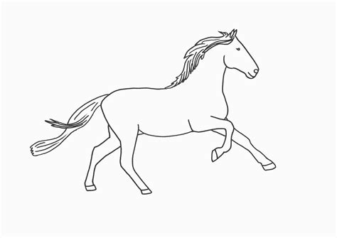 image gallery horse drawings to colour horse outline drawings and coloring pages