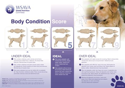 weight management in dogs healthy weight chart healthy weight and