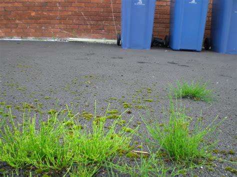 Landscape Fabric Horsetail Mares How To Win Gardening Forum Gardenersworld